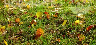 Eсенно килимче