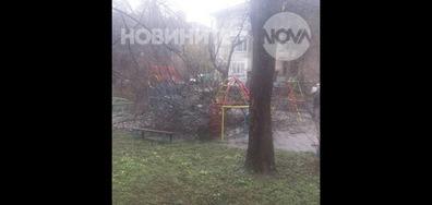 Паднало дърво едва не уби деца