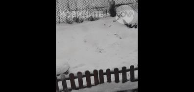 Оранжев снеговалеж в Шумен