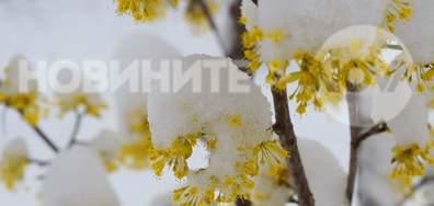 Снежна украса в първите пролетни дни