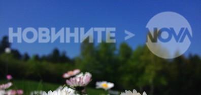 Цветна приказака е днешният пролетен ден