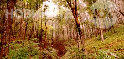 Ранно есенно утро в планината