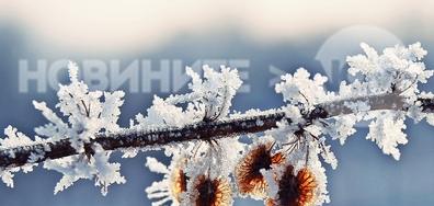 Клонче красива зима