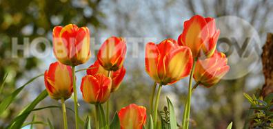Пролетно настроение..