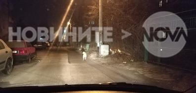 """Опасна глутница бездомни кучета в кв. """"Бояна"""""""