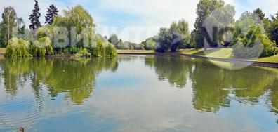 Край езерцето с патенцата, на прохлада