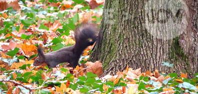 Сред есенните листа!