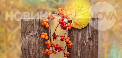 Цветно есенно настроение