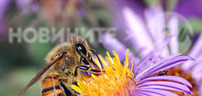 Пчелите умират😭😭