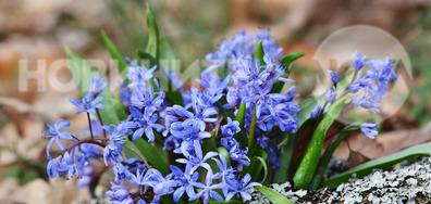 Пролетни горски красоти и аромати