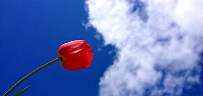 Пролетна целувка