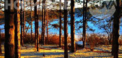 Слънце в снежната гора