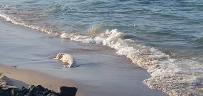 Мъртъв делфин в Приморско