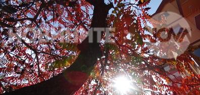Цветен и слънчев октомври!