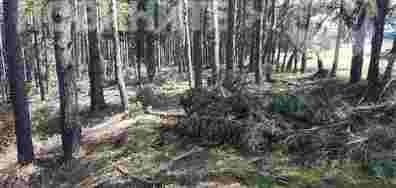 Незаконна сеч в Самоков