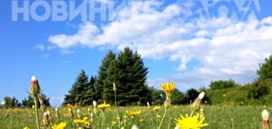 Свежо утро на цветната полянка