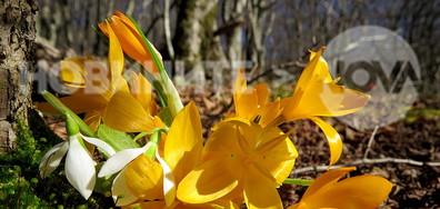 Добре дошла, пролет!