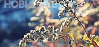 Последни цветове от есента
