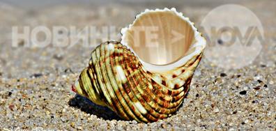 Красота и настроение от морския бряг