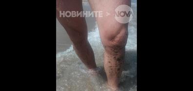 Разливът на мазут край Созопол