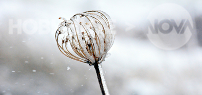 Снежно, приказно