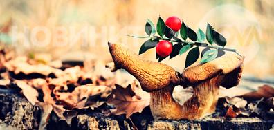 Красотата няма сезони