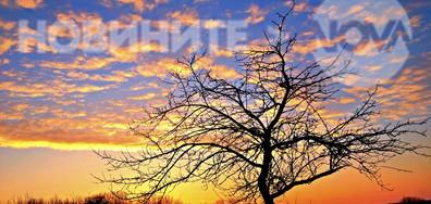 Цветна красота по залез