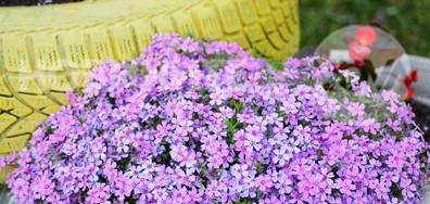 Пролетни цветове