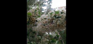 Ухание на пролет!