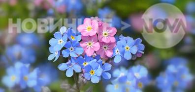 Нежно, цветно, пролетно