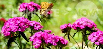 Царството на пеперудите