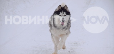 Започва годината на земното куче!