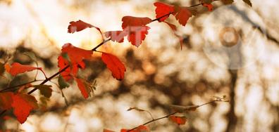 Есенни листенца
