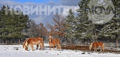 В Конявската планина след първия сняг