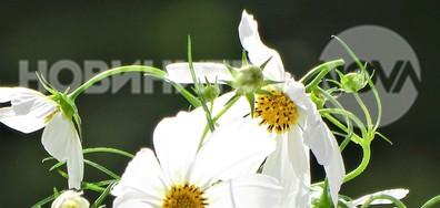 Бяла нежност през есента!