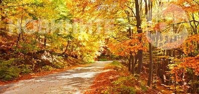 Златна есен...