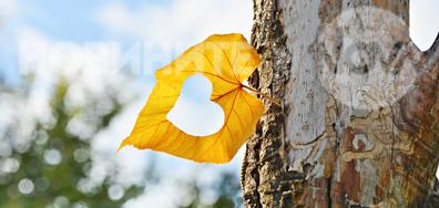 За есента - с любов!