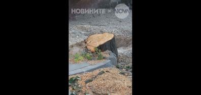 Масова сеч на дървета в Шумен