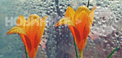 Дъждовно следобедно настроение...