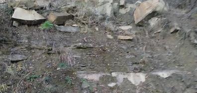 Срутване на скали