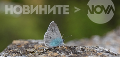 Среща с пеперудка