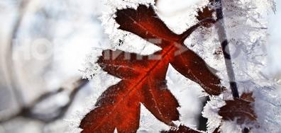 Цвят в красивото зимно утро