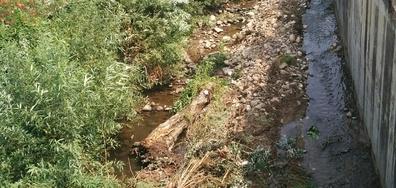 Разтящи дървета в реката, минаваща през центъра на Дупница