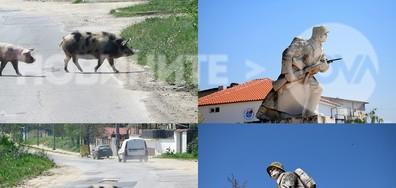 Необичайни пешеходци в Симеоновград!