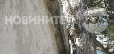 Отрязано дърво заради покрив на гараж