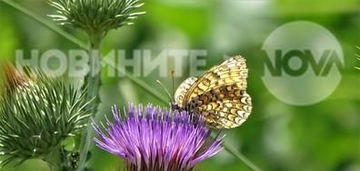 Пеперудено щастие