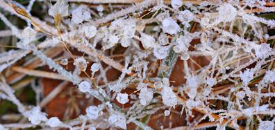 Ледена красота в ранното утро