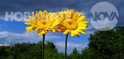 Слънчеви усмивки в дъждовния ден