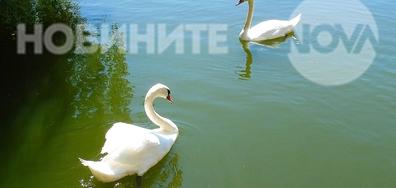 В езерото