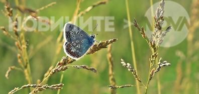 Пеперудено